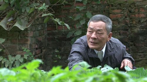 Ông Đinh Văn Trượng xem việc trồng trọt là niềm vui tuổi già